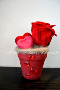 Rose Préservées - Amour - St-Valentin