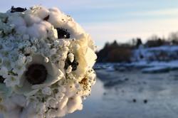Mariage hivernal - Anémones