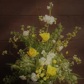 黄色と白の春の花