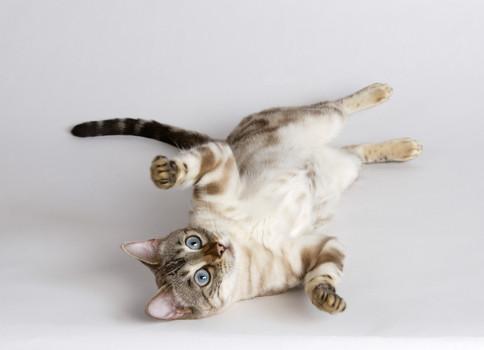 gato e comportamento