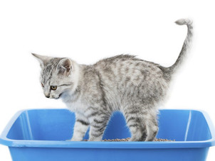 Como conservar a areia do gato? Dicas para ela durar mais tempo.
