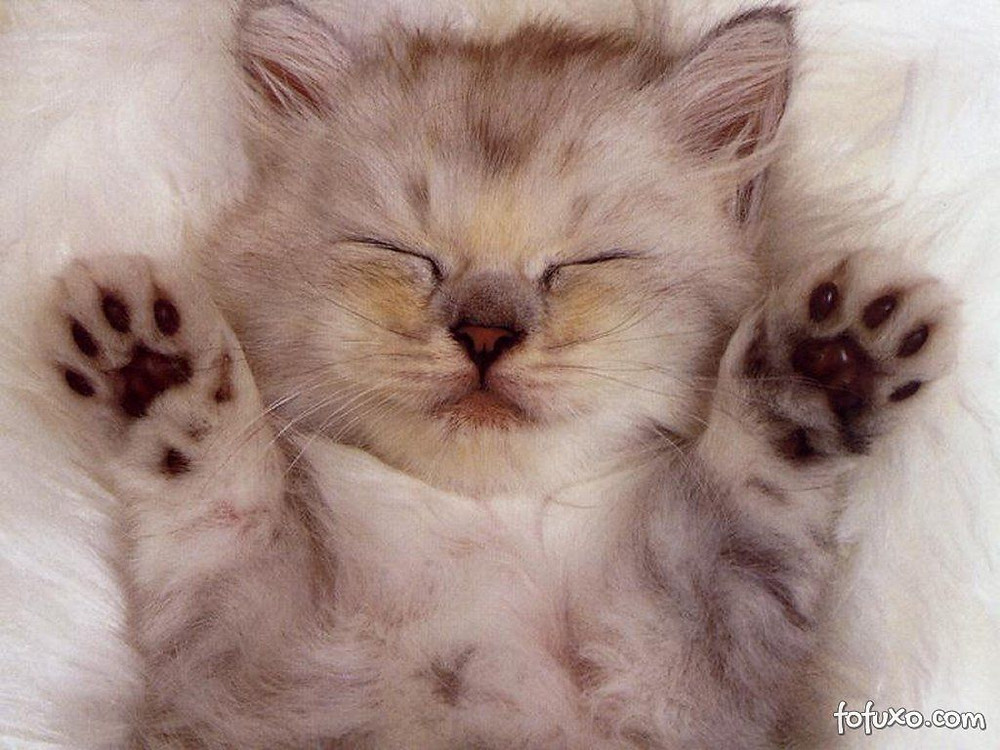 gato carinhoso