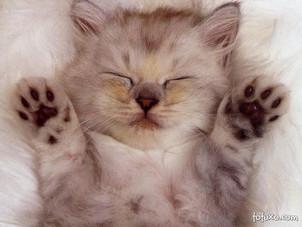 Confira alguns sinais de que realmente os gatos amam os seus donos: