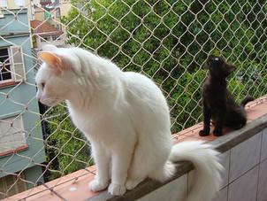 Tela de proteção - Quem tem gatos, precisa usar!