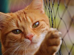 Como organizar a casa para receber um gato?