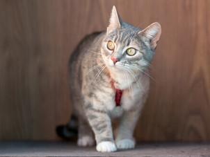 Mudança de ambiente do gato