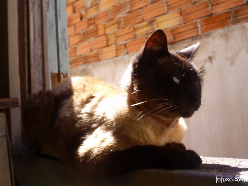 gato de terceira idade