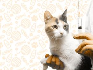 Por que, quando e qual a melhor forma de vacinar gatos?