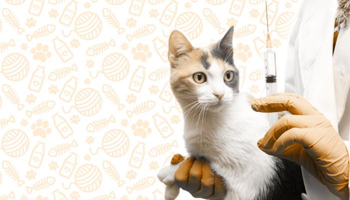 vacina gato