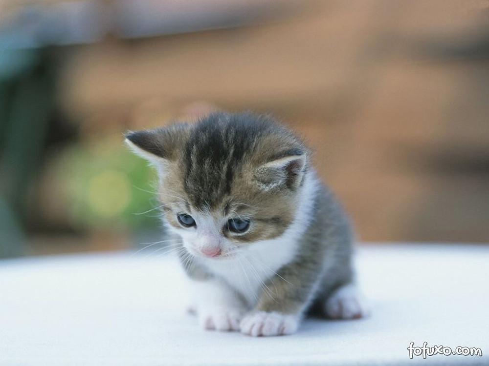 gato bebe