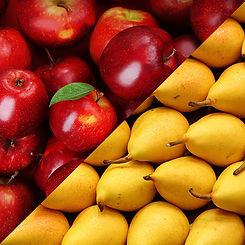 bigger-apple-pears3.jpg