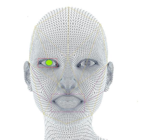 Facex model.jpg
