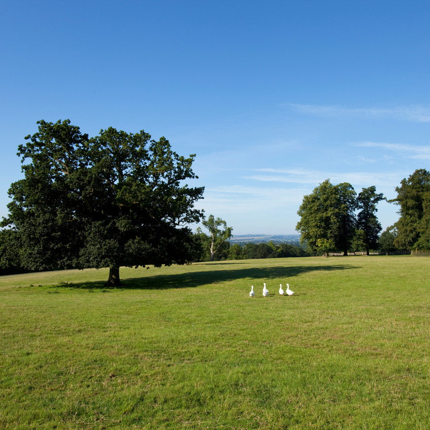 bridwell parkland view