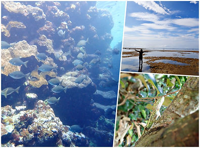 snorkeling & island tour ishigki