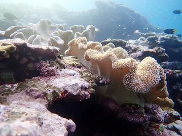 yamabare reef ishigaki