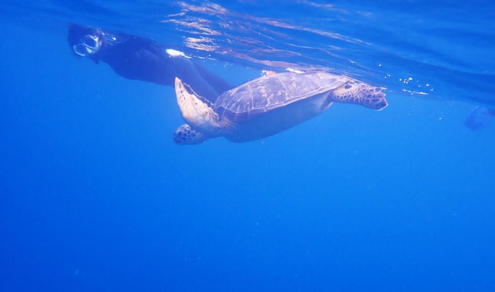 海亀との遭遇率高し! Very high chance to see sea turtles!