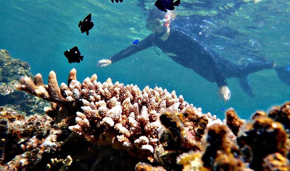 石垣島のカラフルな珊瑚や魚を間近で見て忘れられない思い出に。 Watching colorful coral and reef fish so close!