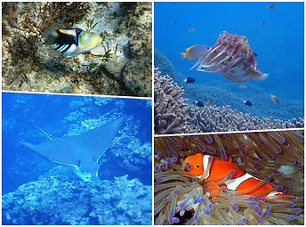 colorful fish in Ishigaki