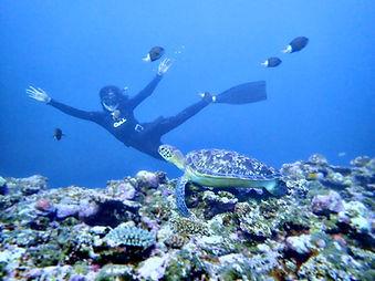 石垣島でウミガメとシュノーケリング