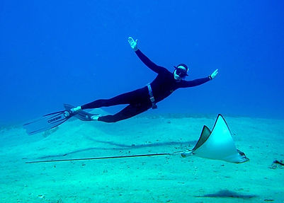 freediving with eagle ray