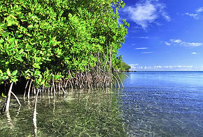 nagura bay mangrove ishigaki