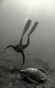 freediving with turtle