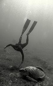 ウミガメとフリーダイビング