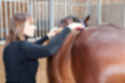Galvanic sur cheval