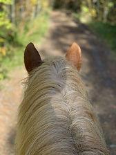 cheval chemin.jpg