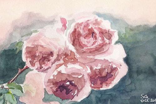 Roses pompons