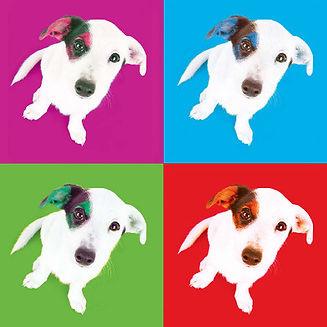 Logo chiens Pixieboots