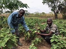 Agbesi Farms