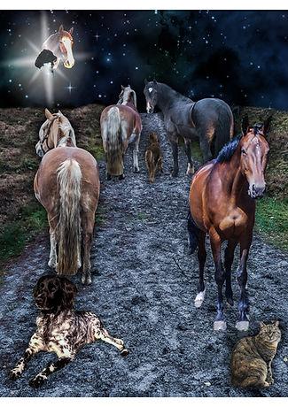 PaardenPraatPlaat
