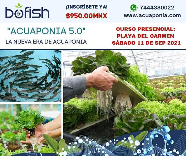 acuaponia 5.0. flyer.jpeg
