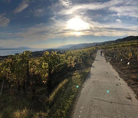 Chemin vigne.jpeg