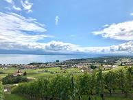 Vue lac vignes.jpg