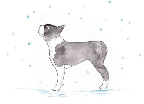 Boston Terrier Christmas Cards set of 6