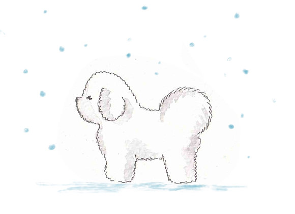 Bichon Frise Christmas Cards set of 6