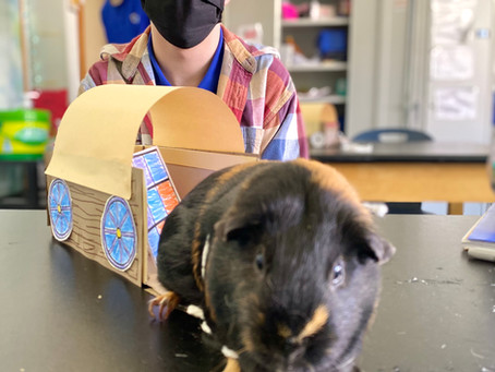 Joey D. Hangs Out with the Guinea Pigs