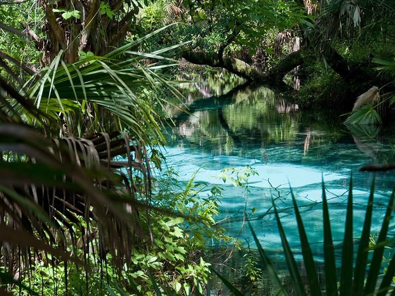 ocala national forest.jpg
