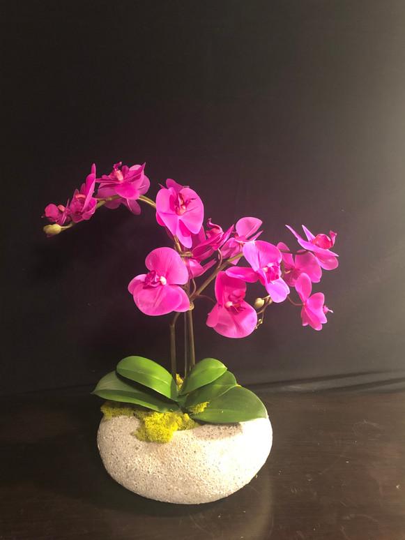 Orchid7.jpg