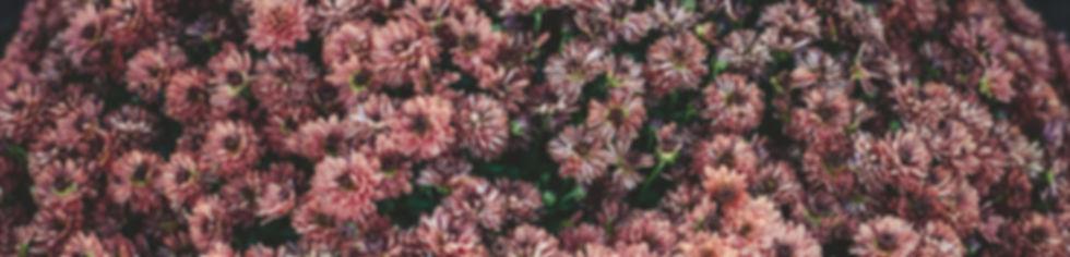 Flowers_edited.jpg