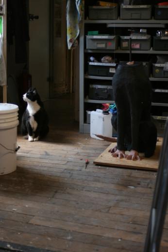 vu d'atelier josé et le corps du chien