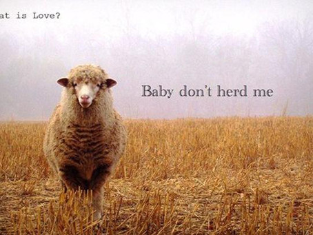 What is Love….. Baby Don't Herd Me
