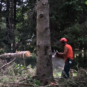Felling the stick