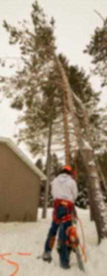 Doug Foley - 906 Tree Service