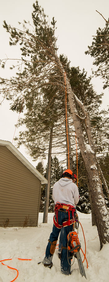 Doug Foley - 906 Tree Service