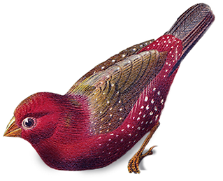 birds-png2_edited.png