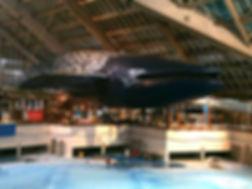 Rio de Janeiro, Brazil, peintures décoratives, decorative paintings, Odile Dardenne, odiledardenne.com, trompe-l'oeil, Geribapaintings - Odile Dardenne - Forest Hill Aquatic Park Aquaboulevard - Paris - France
