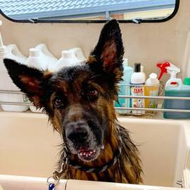 Pup-A-Razzi Facebook (15).jpg